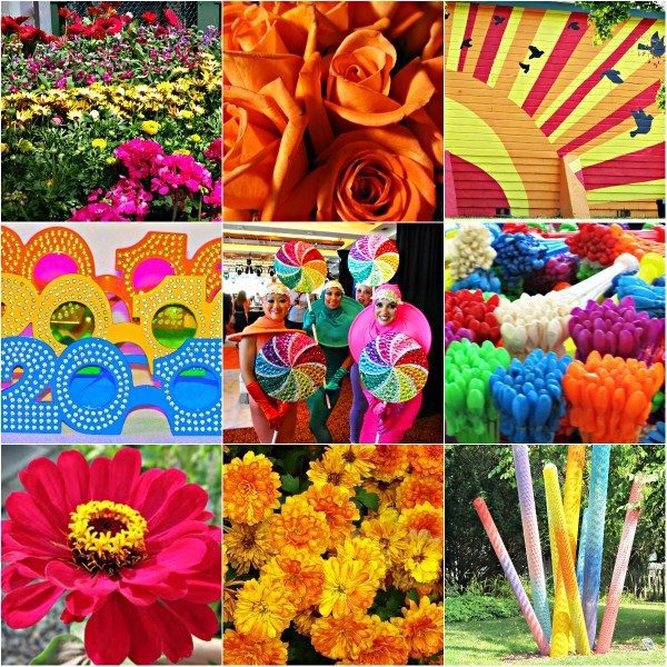 Weekly Photo Challenge: VIBRANT - A Splash Of Colors!