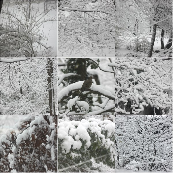 Weekly Photo Challenge: TIME - Snow Fall & the transitory nature of the weather