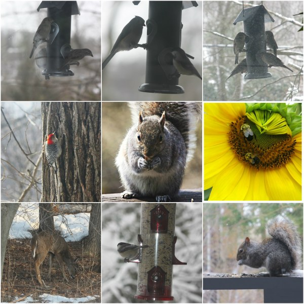 Weekly Photo Challenge: DINNERTIME - In the yard
