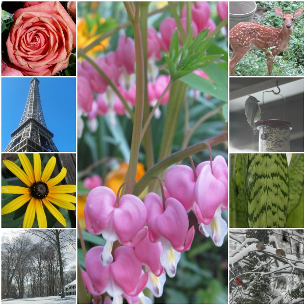 Weekly Photo Challenge: GRACEFUL - from nature to landmarks