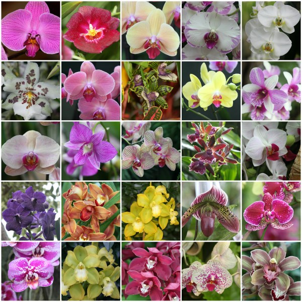 Photo Challenge: PROLIFIC - Orchids fit the bill