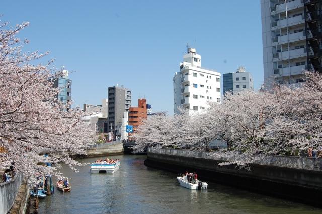 東京で船から桜を見れる場所や料金は?おすすめ穴場スポット