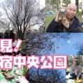 新宿中央公園での花見体験レポート!都庁と高層ビルと桜のコラボ