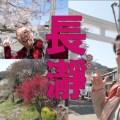 埼玉県秩父郡長瀞町をぶらり散歩!満開の桜と宝登山からの景色が圧巻