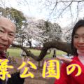 千葉公園は桜がきれいな名所!お花見散歩で千葉公園を散策♪