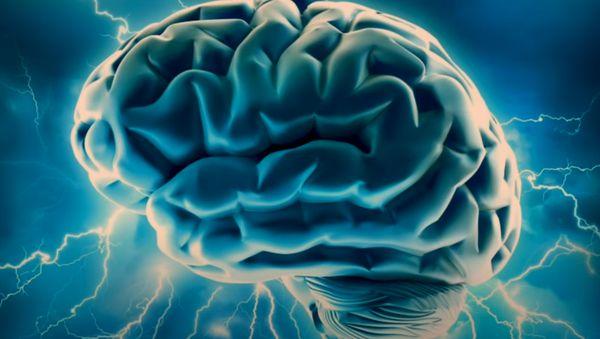 какие продукты для мозга будут присутствовать в меню