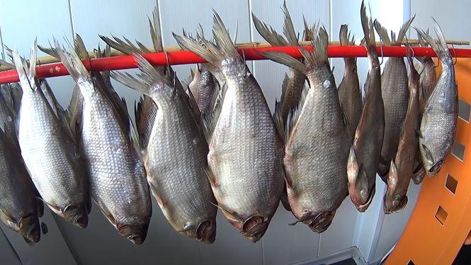 На вяление идет как морская так и речная/озерная рыба