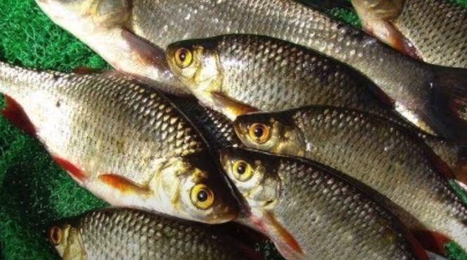 Лучше всего вялить рыбу на улице