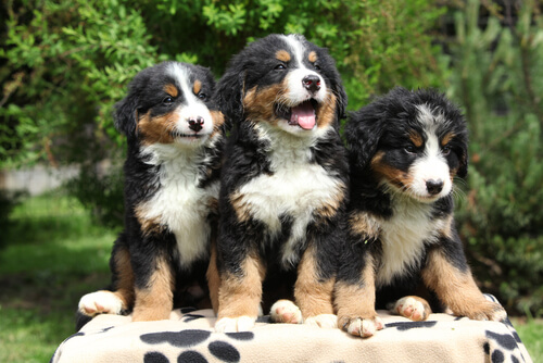 cachorros perro