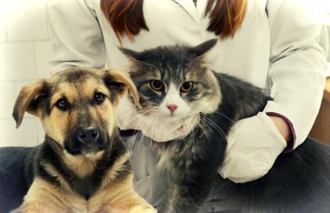 cachorro e gato veterinário