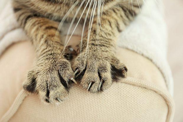 Una garra de gato de cerca.