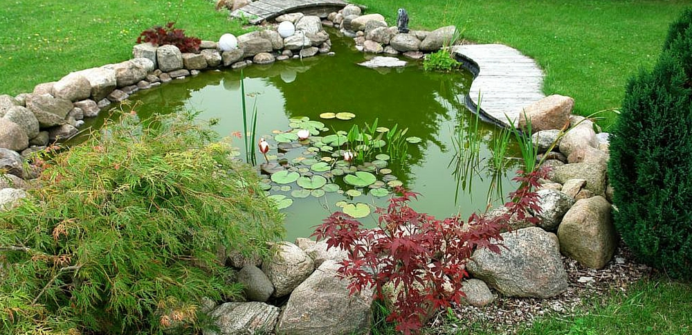 Top 5 Fishes to keep in your Backyard Pond