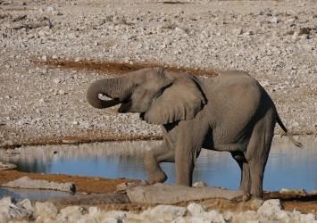 Elephant, Olifantsbad