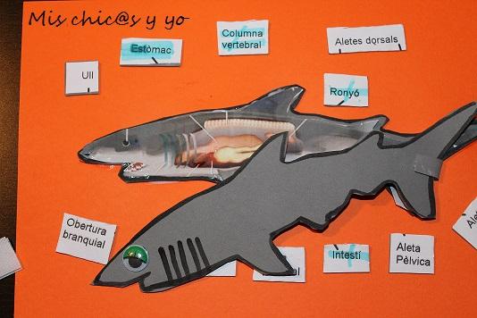 Proyecto primaria: Las partes del cuerpo del tiburón - Mis chic@s y yo
