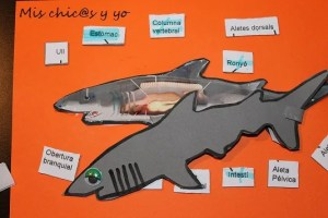 Órganos internos tiburón
