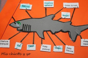 Anatomía tiburón
