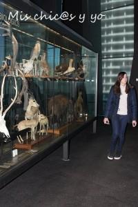 Museo ciencias naturales