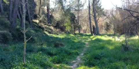 Pequeño bosque en la ruta Via Augusta