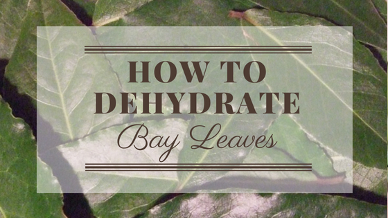 How To Dehydrate Bay Leaves