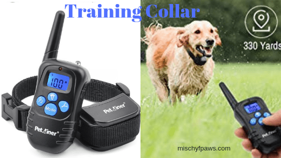 Training Collar Title