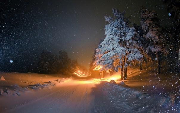 Árvore num caminho cheio de neve