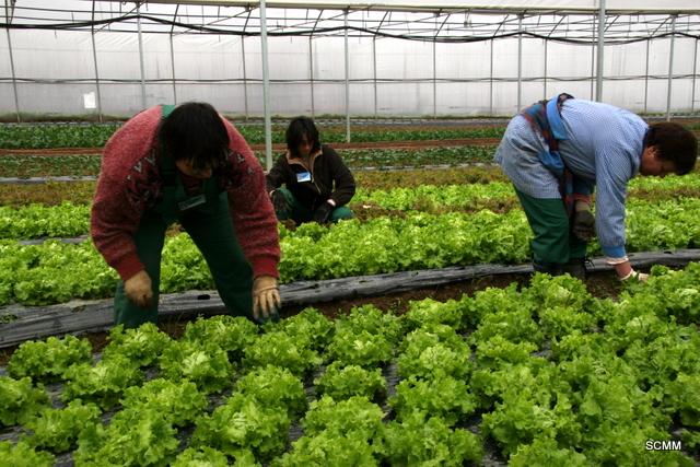 Quinta da Avó: Empresa de Inserção Social