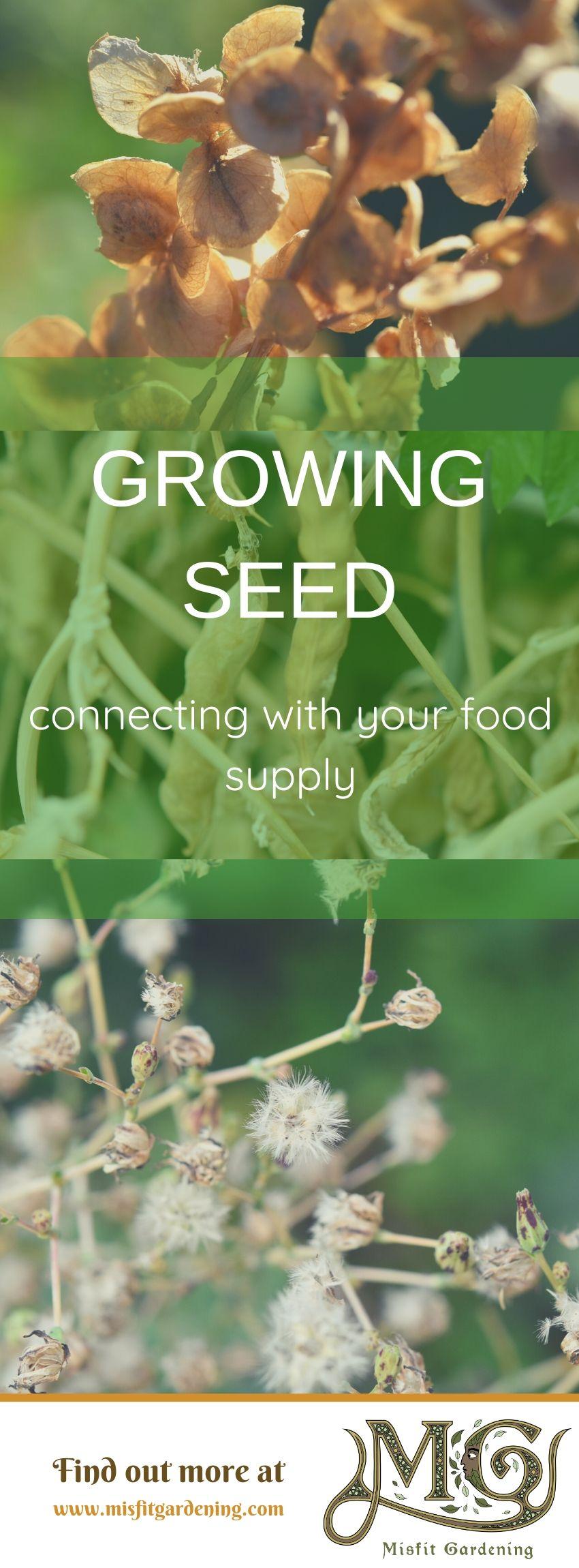 Klicken Sie hier, um mehr über die Kulissen eines Saatgutunternehmens zu erfahren, oder stecken Sie es fest und speichern Sie es für später. #garten #homestead #nongmo #seeds