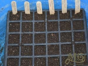 Starthilfe für das Saatgut