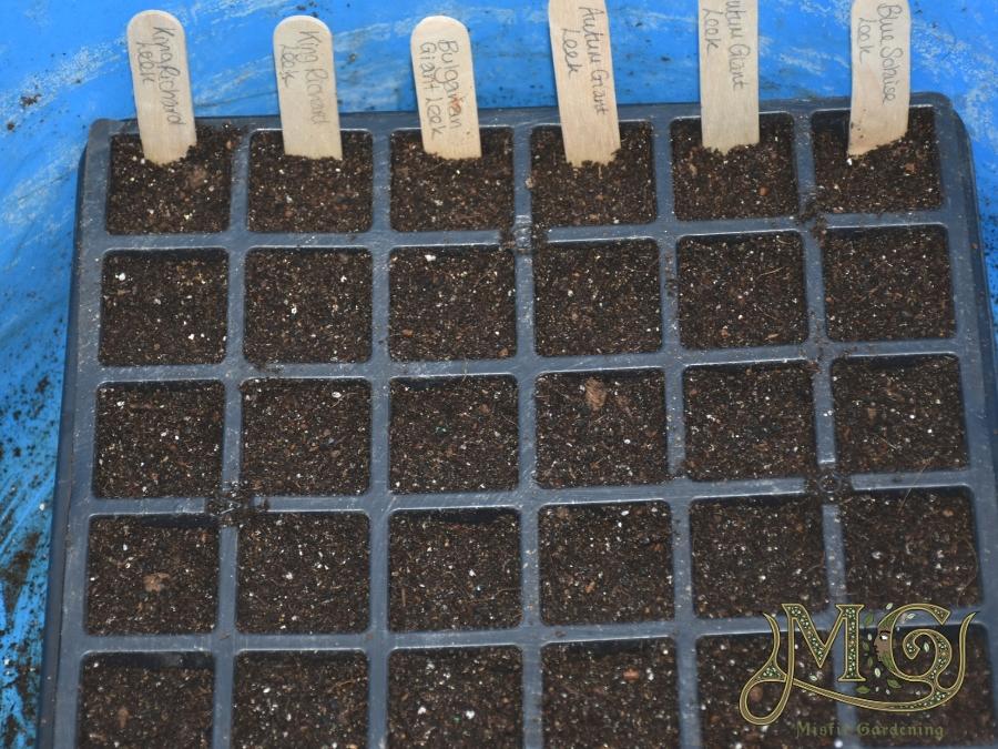 Lauch aus Samen wachsen lassen