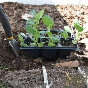 Starttipps für Samen
