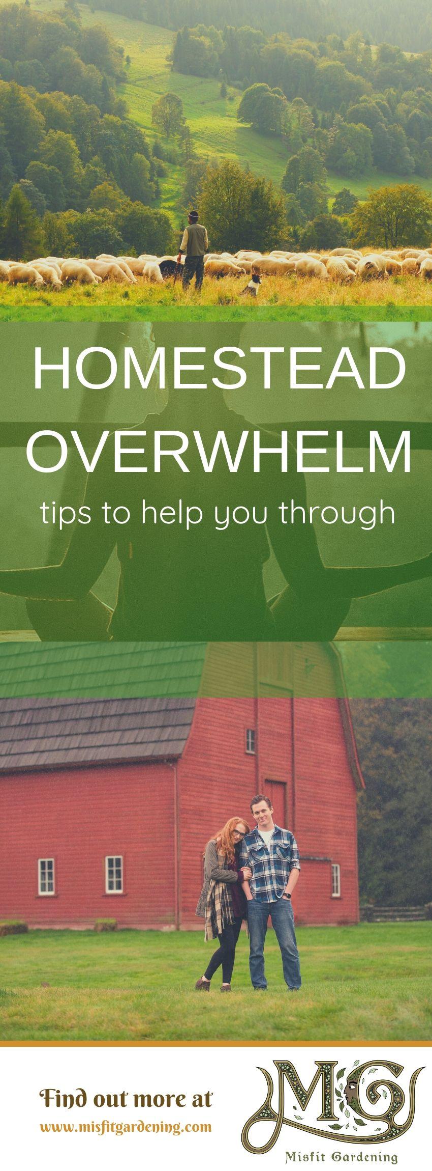 Klicken Sie hier, um mehr über den Umgang mit Homestead-Überwältigungen zu erfahren, oder stecken Sie sie fest und speichern Sie sie für später. #homesteading