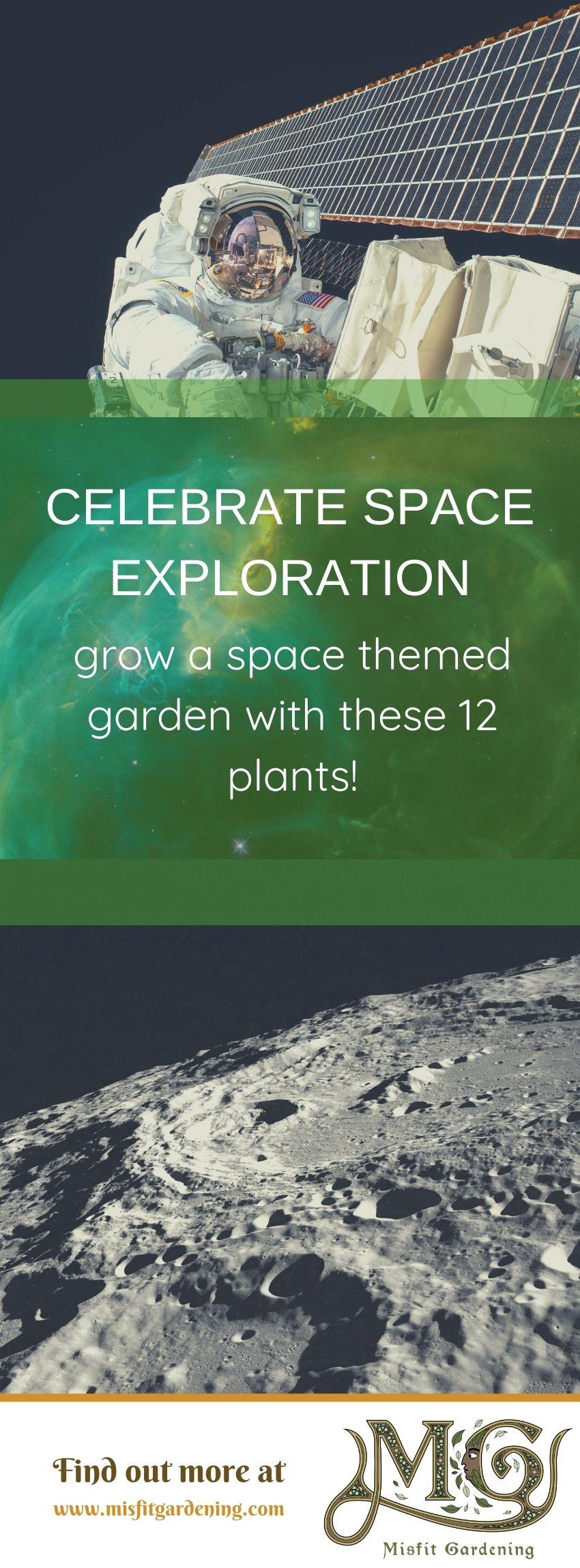 Klicken Sie hier, um 12 Gemüse mit Platzmotiven anzuzeigen, die Sie anbauen oder anheften und für später speichern können. #homesteading #gardening