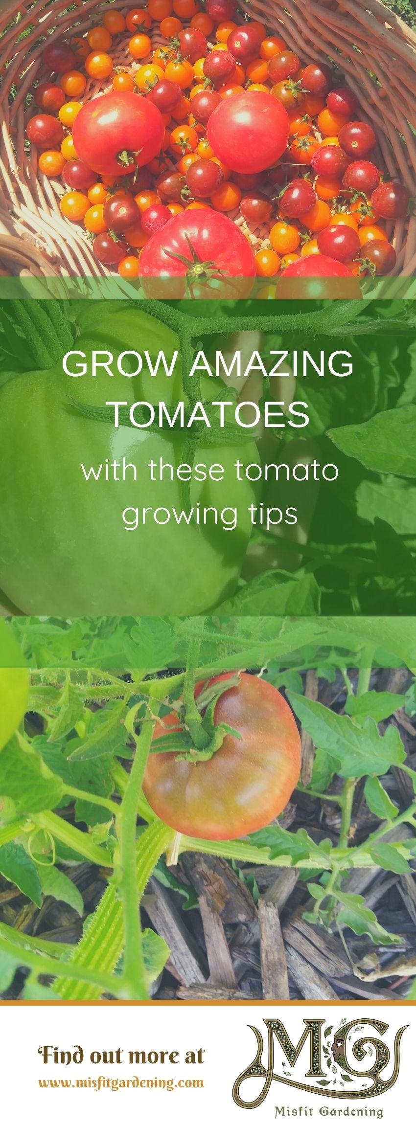 Klicken Sie hier, um zu sehen, wie Sie Tomaten anbauen oder anheften und für später speichern können. #Homesteading #Garten