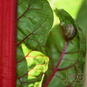 Intensive Gartenarbeit wachsen mehr Nahrung