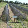 Argentina segunda en producción orgánica certificada