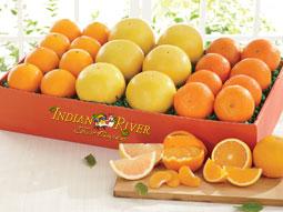 Indian River Mixed Citrus Fruit