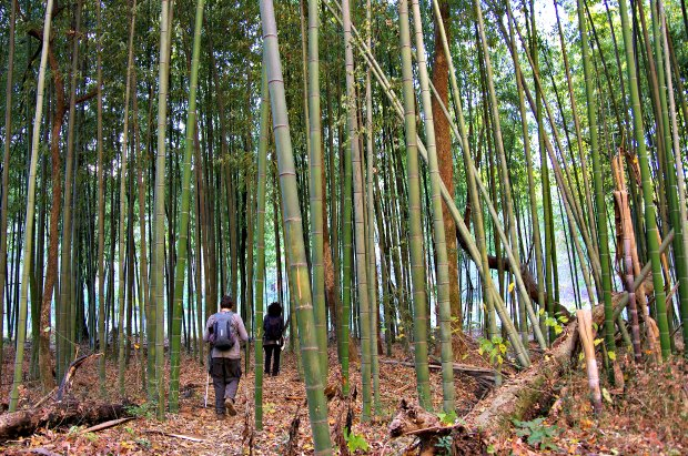 Hiking bamboo forest East Palisades Atlanta