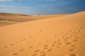 Desierto marcas de pies