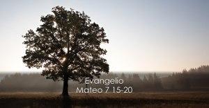 Mateo 7 15-20