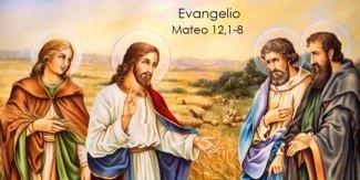 Mateo-12,1-8