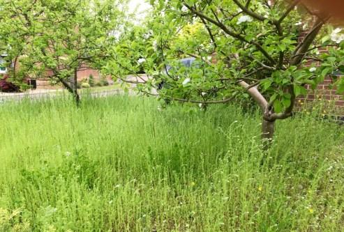 wild flowers & apple trees