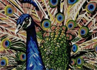 PAVOREAL: gráfico de punto de cruz para bordar pavo real