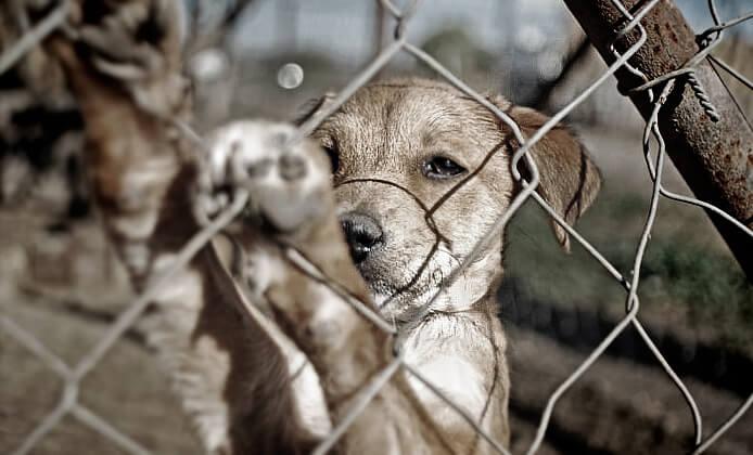 Qué hacer al presenciar maltrato animal