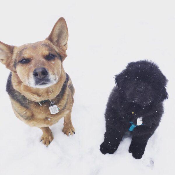 El cachorro Sirius y su hermana mayor Charlotte.  (Foto de Sassafras Lowrey)