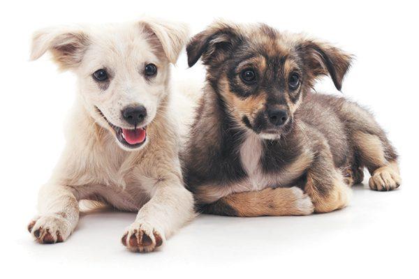 Dos cachorros pasan el rato juntos.