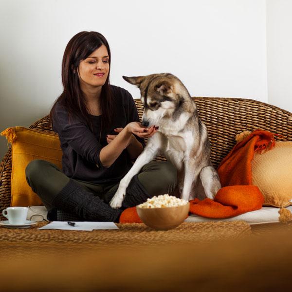 ¿Pueden los perros comer palomitas de maíz?