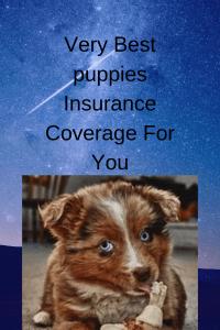 ¿Cuál es el mejor seguro de responsabilidad civil para cachorros?
