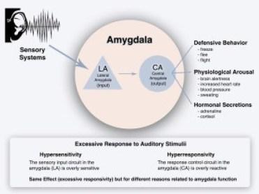 misophonia-research-NYU