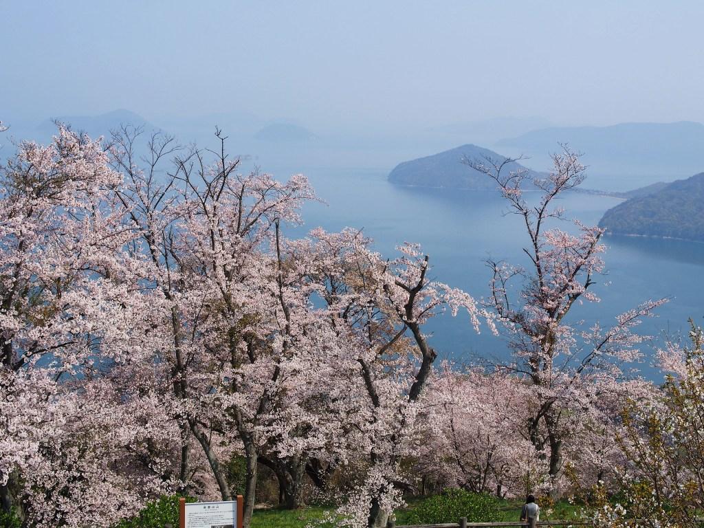 山頂の景色 (開花後)