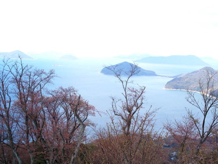 山頂の景色 (開花前)